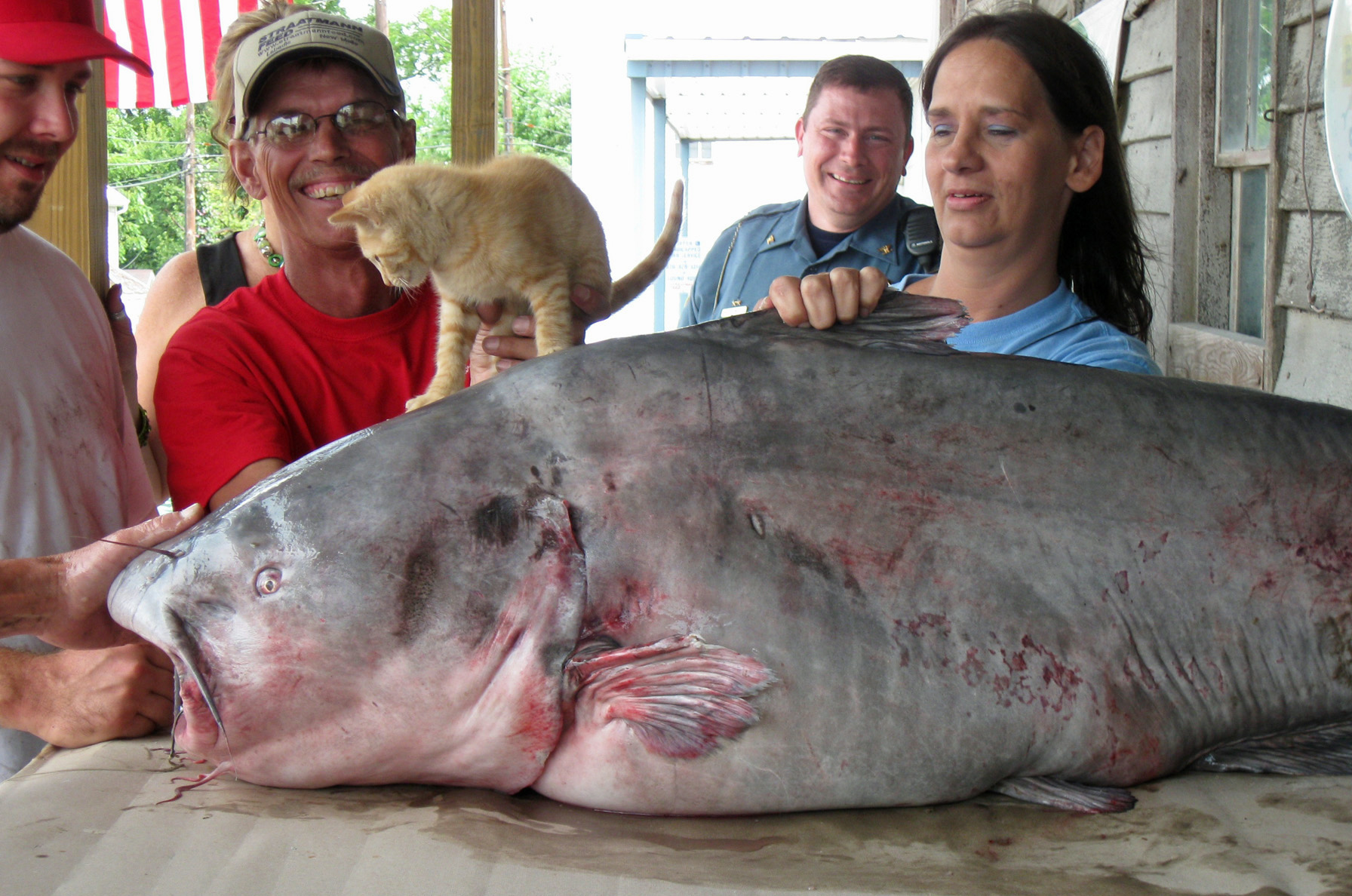 Record breaking catch florissant angler catches 130 pound for Missouri state record fish