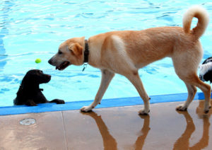 dog pool party