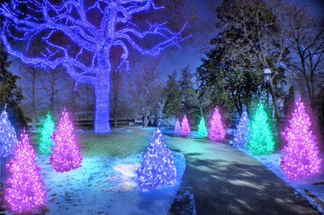 Experience the Magic of the Missouri Botanical Garden this Holiday Season!
