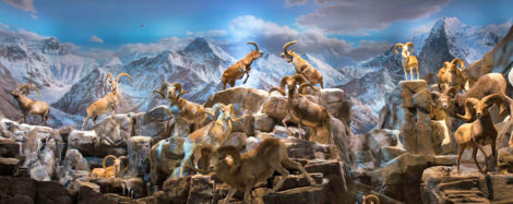 The Wildlife National Museum, one of two parts to the Wonders of Wildlife, located near the famous Bass Pro Shop in Springfield, MO. Here you'll find 4-D dioramas that are part of the these immense wildlife galleries show here   (photo courtesy of Wonders of Wildlife)