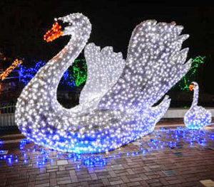 Swan at zoo wild lights pg 20